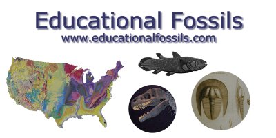 Educational fossils earth roductsscience p
